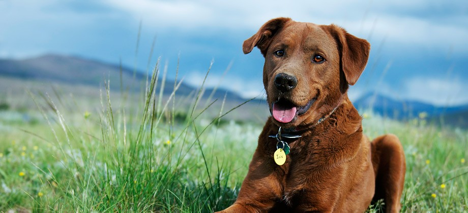 Pets – 14 Feature Image